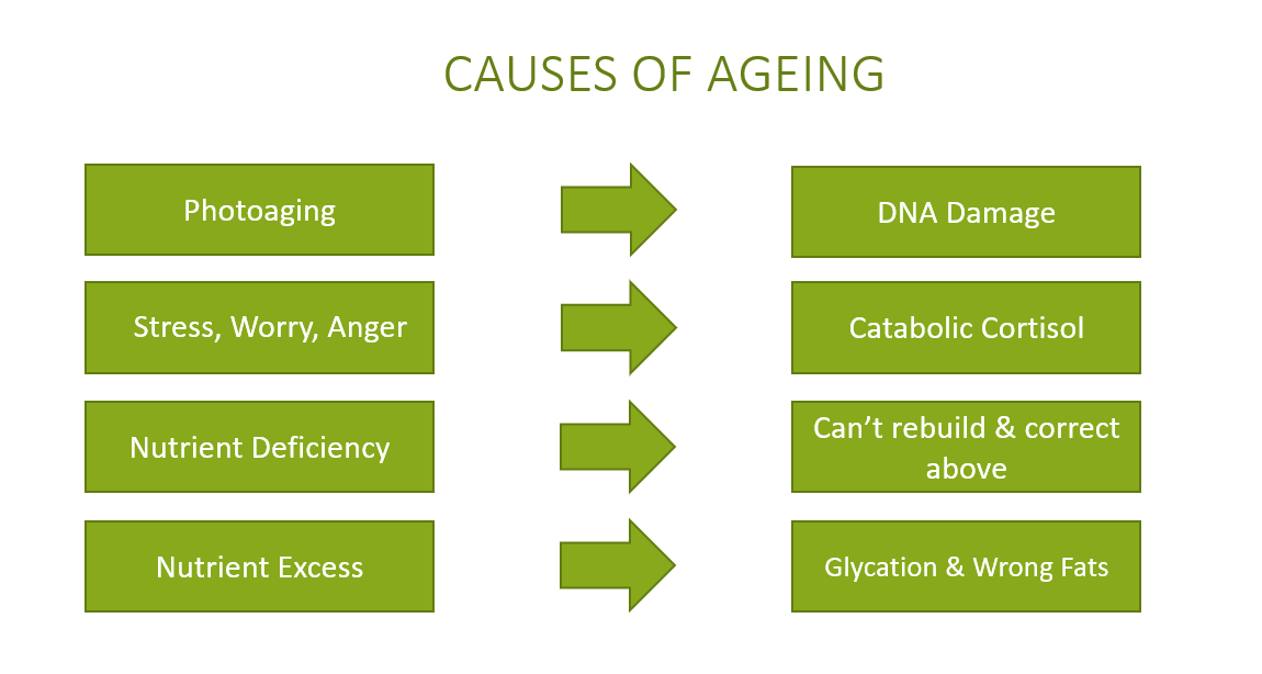 Causes of Ageing